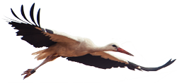 Meister Adebar (Storch)